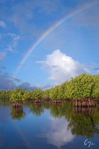 Biscayne Bay's Wild Western Shoreline: Photography from a Canoe by Constance Mier opens at Biscayne National Park