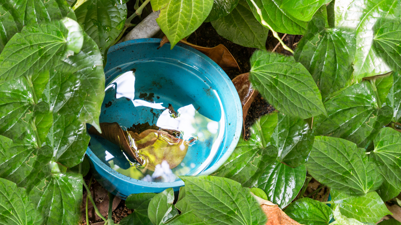 Image of a blue bucket filled with water sitting on the ground among shrubbery