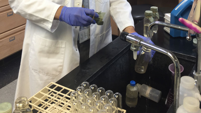 lab technician testing water samples in test tubes